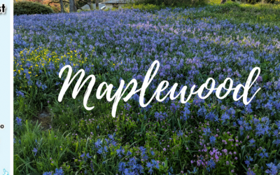 Maplewood with Cathy Scott